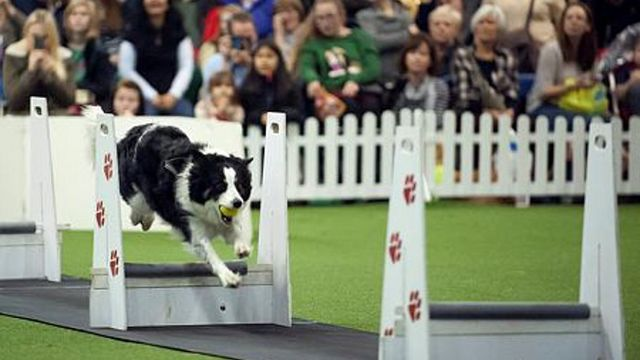 Discover Dogs at London's Earls Court