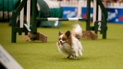Eukanuba Discover Dogs at London's Excel on October 17th and 18th